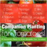 ¡14 plantas complementarias para cultivar con tus tomates!