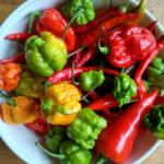 ¡15 variedades súper calientes que todos los entusiastas de la pimienta deberían probar!