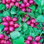 ¡16 cultivos para plantar para el otoño ahora!