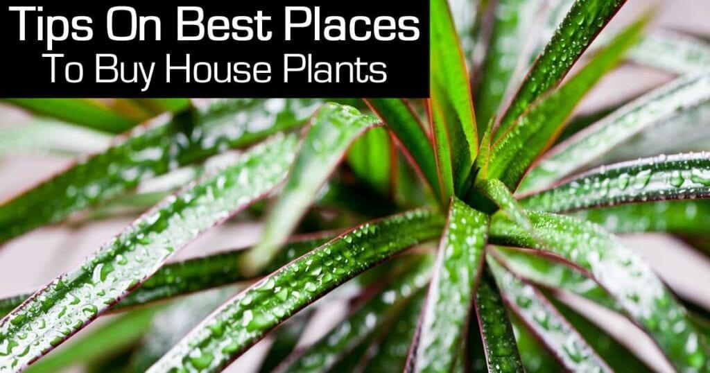 best-places-plants-103114