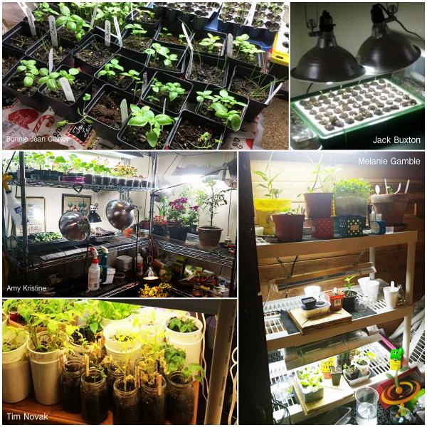 """¡Inspírate!  """"Estaciones de cultivo de interior"""" [Customer Image Photo Gallery]"""