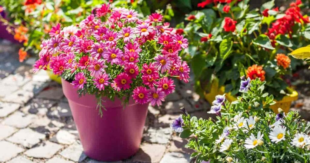 Bright cheery blooms with attractive pot make this patio inviting