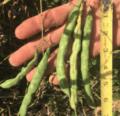 ¡Nuevas variedades para 2021!  |  Intercambio de semillas de exposición al sur