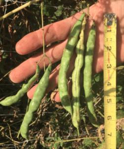 ¡Nuevas variedades para 2021!     Intercambio de semillas de exposición al sur
