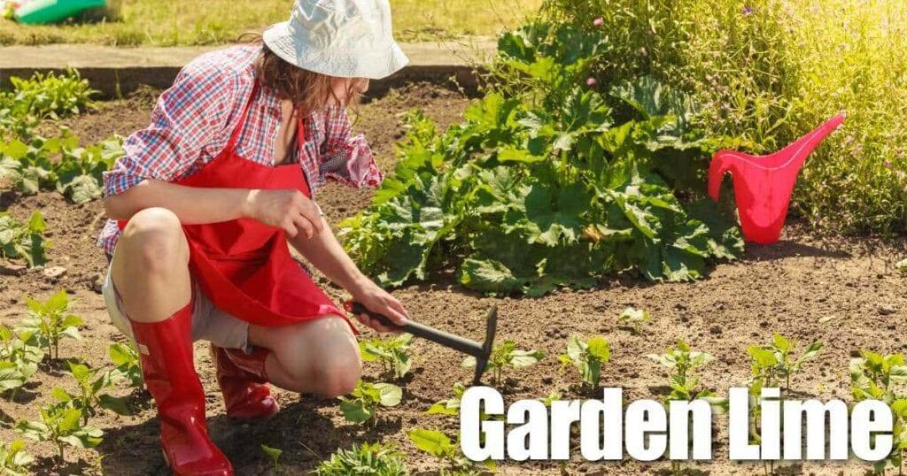 garden-lime-05312016