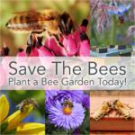"""¡Salva a las abejas!  ¡Plante hoy un jardín """"apto para abejas""""!"""