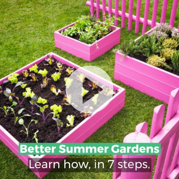 ¡Tenga un mejor jardín de verano con estos 7 consejos!