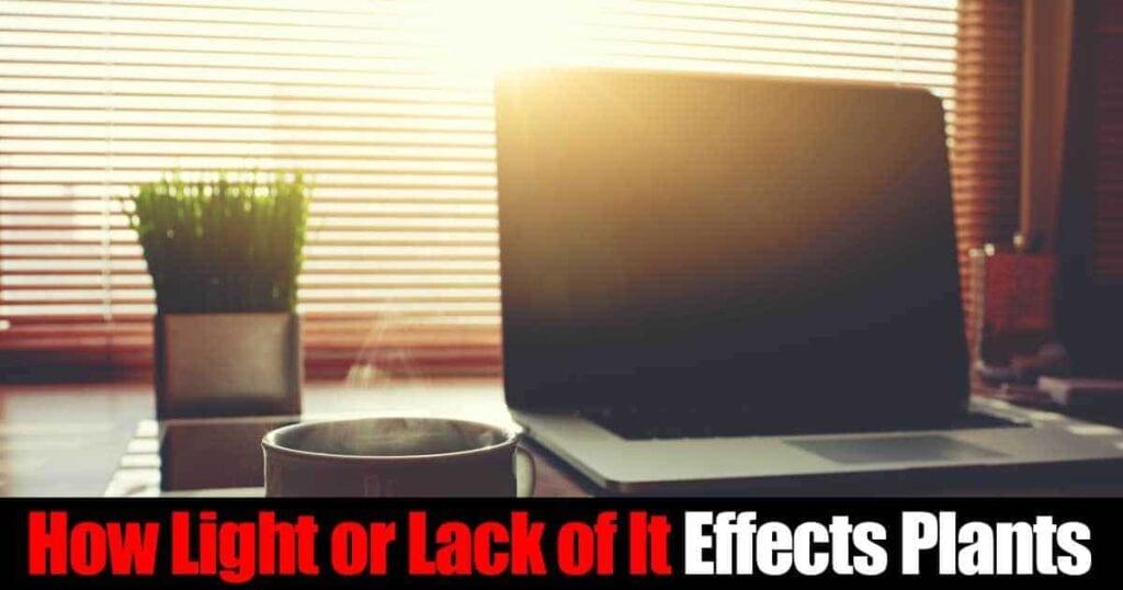 light-effects-plants-01312016