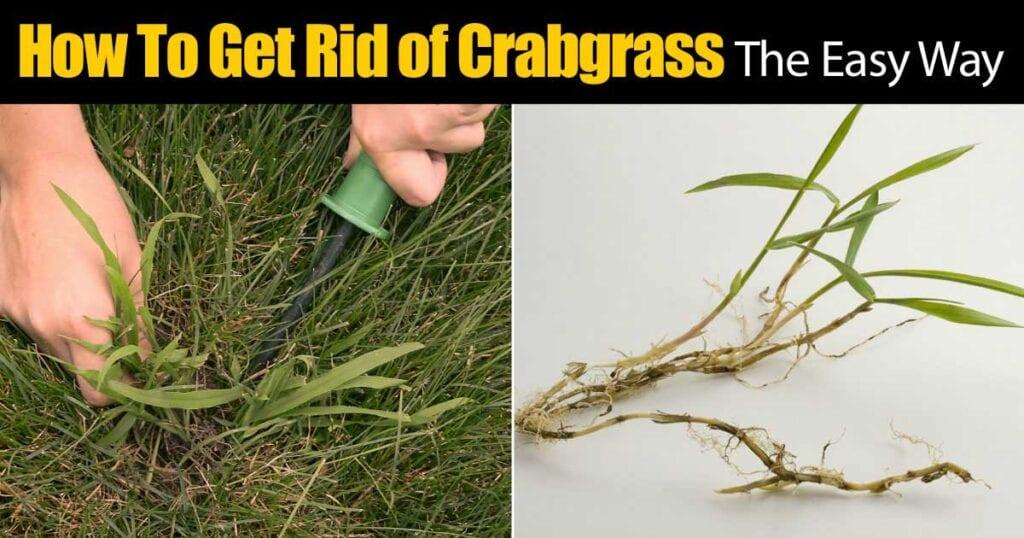 crabgrass-rid-93020151643