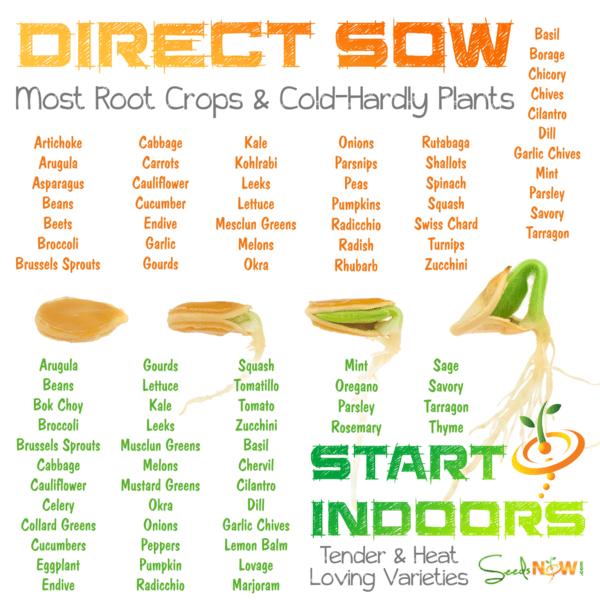 ¿Con qué semillas puedo EMPEZAR?  ¿Qué semillas puedo dirigir a sembrar?