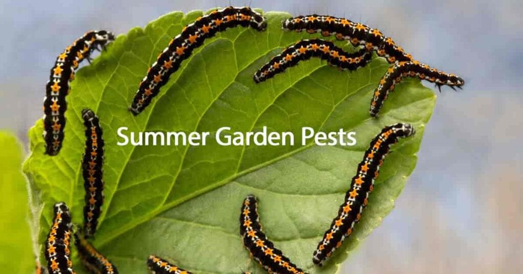 ¿Cuáles son las plagas de jardín de verano más activas?  -