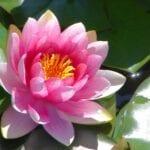 ¿Cuáles son los mejores?  ⋆ Gran blog de jardinería