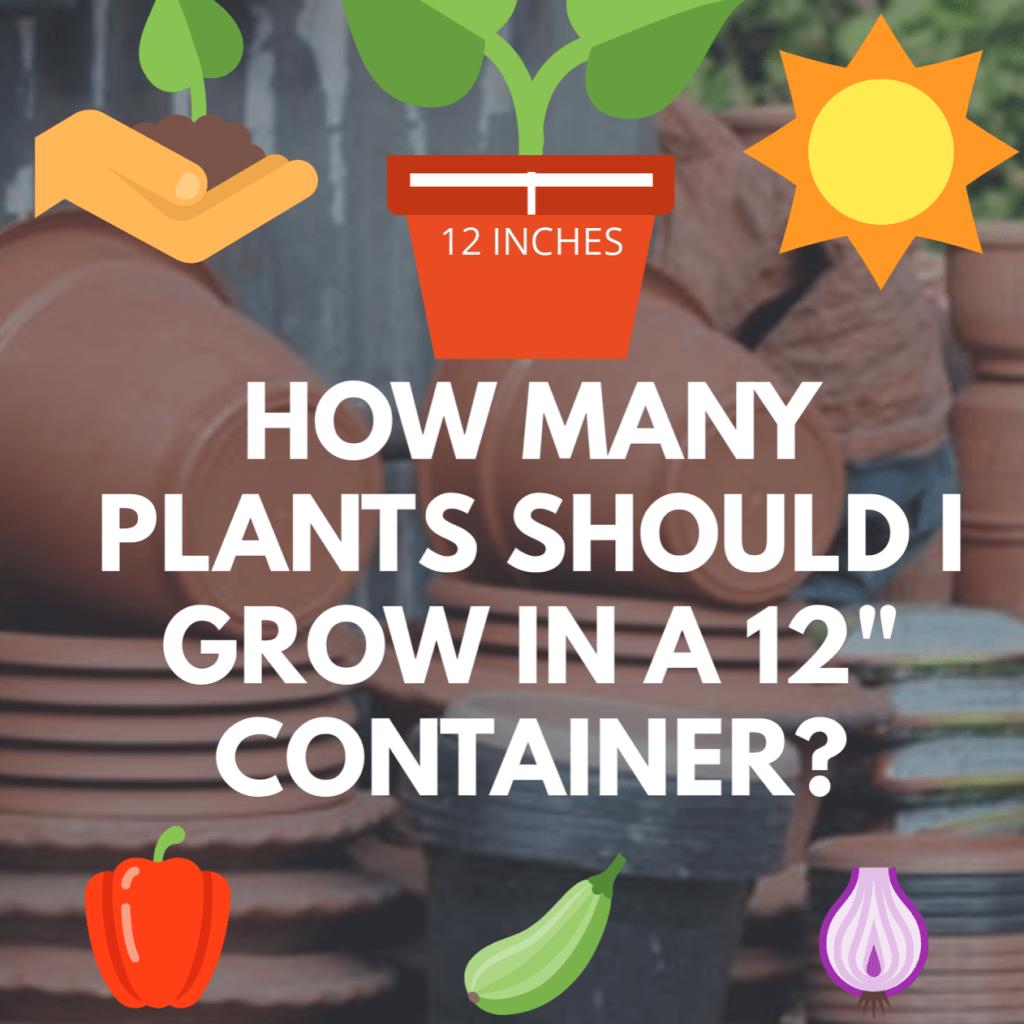 ¿Cuántas plantas puedes cultivar en un recipiente de 12 pulgadas?