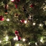 ¿Cuántos tipos de pinos navideños existen?