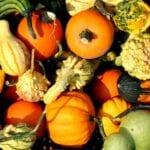 ¿Deben cultivarse pepinos, calabazas, melones y sandías cerca unos de otros? | cucurbitáceas