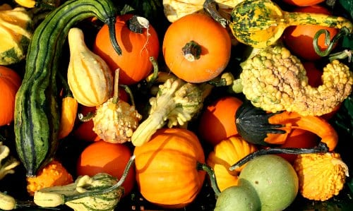 Cucumbers, squash, muskmelons and watermelons should not be grown near each other