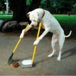 ¿Debería compostar los excrementos de perros o gatos?