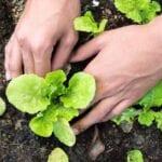 ¿Eres jardinero por primera vez?  ¡Empieza aquí!