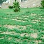 ¿Es su césped un depósito de productos químicos?  ⋆ Gran blog de jardinería