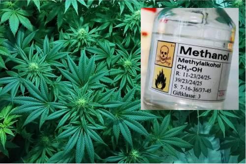 Will Methanol Foliar Spray Grow Bigger Plants?