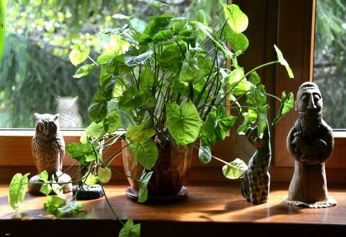 House plants don't increase oxygen levels in the home.
