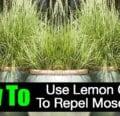 ¿Lemongrass repele a los mosquitos?