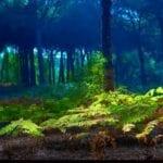 ¿Los bosques eliminan el CO2?