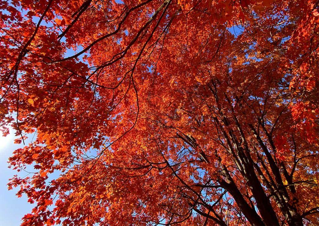 ¿Por qué caen las hojas en otoño?  ⋆ Gran blog de jardinería