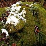 ¿Por qué crece musgo en el césped?