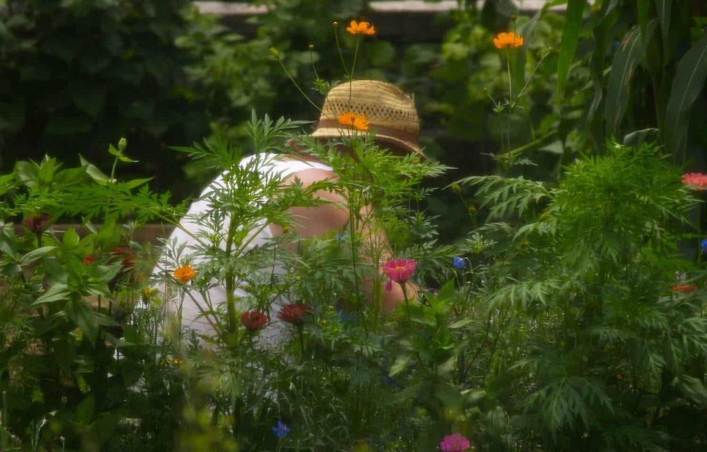 ¿Puede la jardinería salvar tu vida?  ⋆ Gran blog de jardinería
