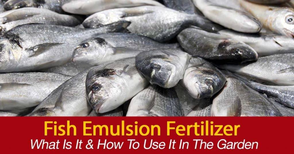 El pescado entero y el pescado fresco se utilizan para hacer emulsiones líquidas de pescado.  Bueno para las plantas y bueno para la salud del suelo.