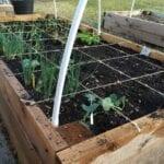 ¿Qué es la jardinería de pies cuadrados?  ⋆ Gran blog de jardinería