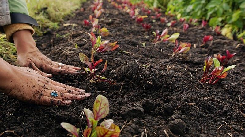¿Qué es suelo orgánico?  ⋆ Gran blog de jardinería