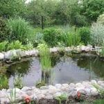 ¿Qué le pasa al agua del estanque de mi jardín?
