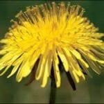 ¿Qué plantas son malas hierbas?  ⋆ Gran blog de jardinería
