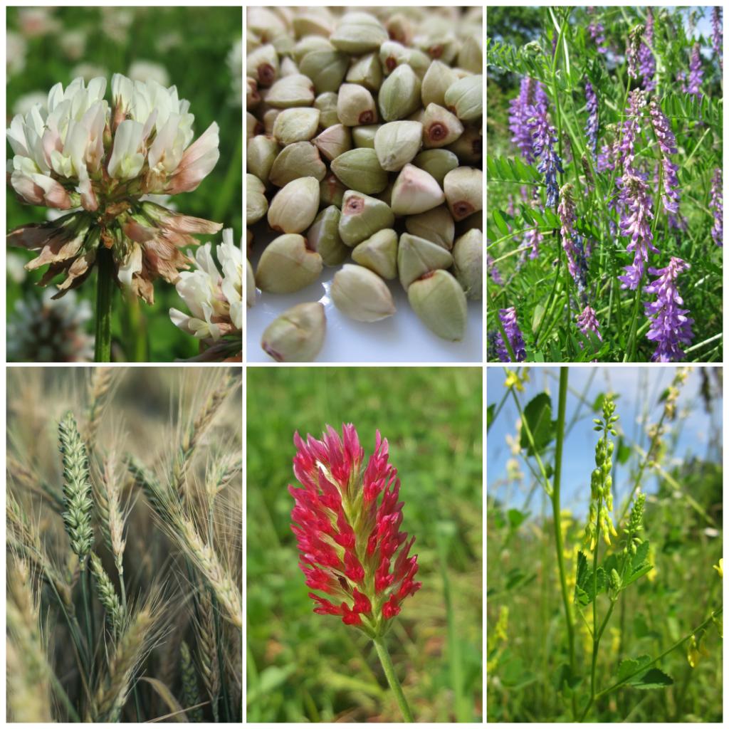 ¿Qué son las CULTURAS DE PORTADA y por qué debería plantarlas en mi jardín?