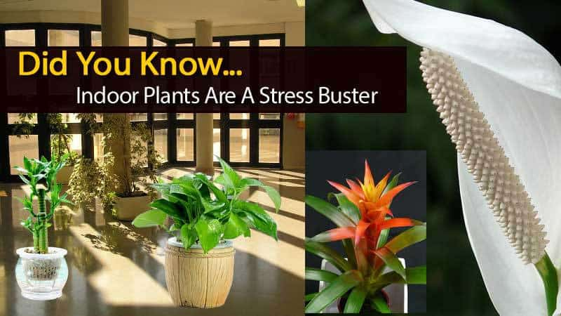 plant-stress-buster-120613