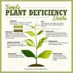 ¿Se pueden usar las hojas para identificar deficiencias de nutrientes?