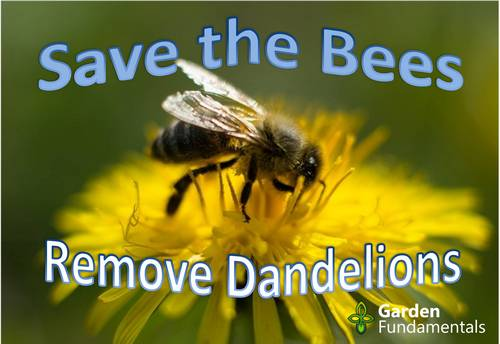 Are Dandelions Really Important to Bees?