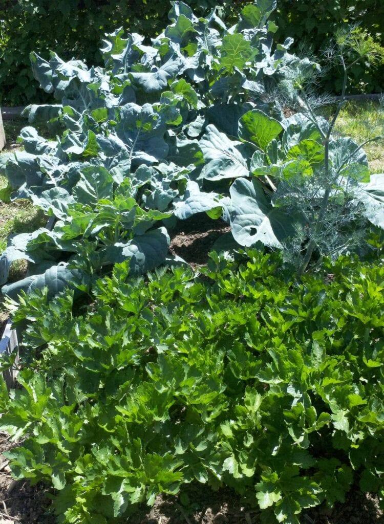 ¿Su césped y jardín son químicamente dependientes?  ⋆ Gran blog de jardinería