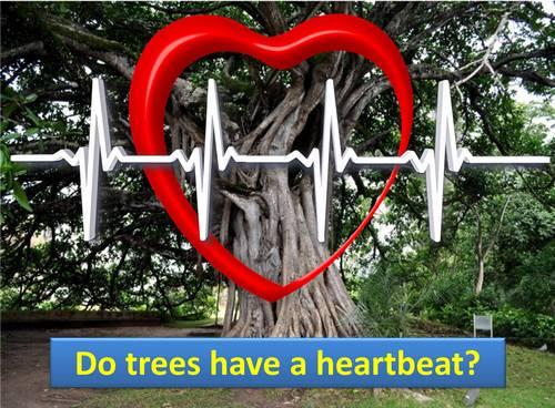 Do Trees Have A Heartbeat? - A Myth is Born