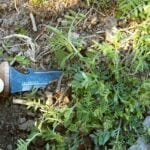 ¿Un herbicida que dura para siempre?  ⋆ Gran blog de jardinería