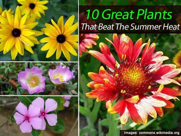 10-plant-summer-013114