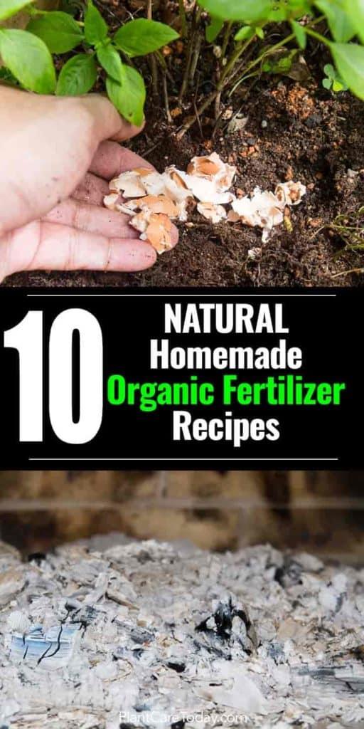 opciones de fertilizantes orgánicos naturales: cáscaras de huevo y cenizas de madera utilizadas como fertilizantes naturales