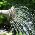 11 consejos de riego para tu jardín