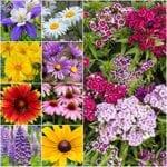 12 Cultivos perennes para crecer en suelo de Wet