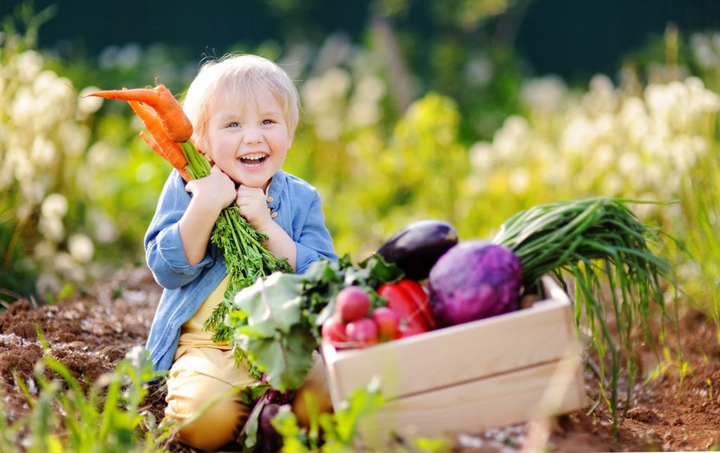 Niño lindo sosteniendo un manojo de zanahorias orgánicas frescas en el jardín doméstico.