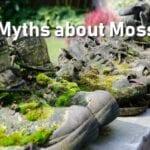 14 mitos sobre el musgo que todo jardinero debería conocer