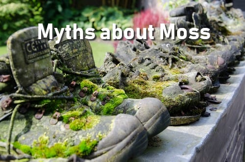 Moss Myths Every Gardener Should Know