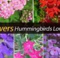 15 flores que a los colibríes les encanta visitar